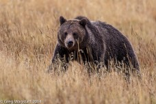 Grizzly Tales-15