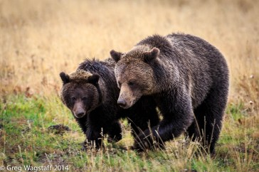 Grizzly Tales-21