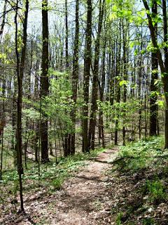 spring-trail