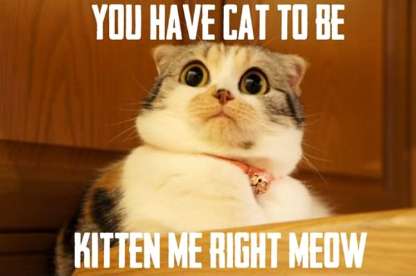 you-have-cat-to-be-kitten-me-right-meow