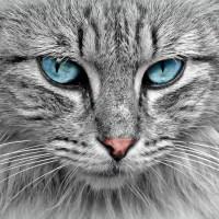 Consultation vétérinaire en ligne chat