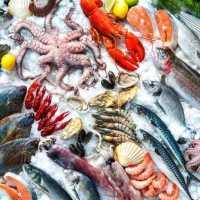 Merekam Warisan Kuliner Laut Nusantara
