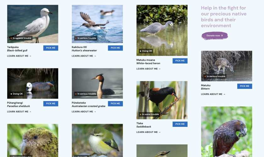 Bird of the year 2021 web page.