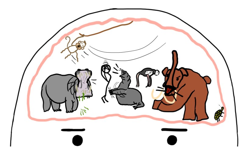 Image result for wait but why animals brain