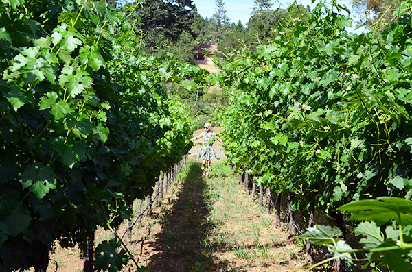 Napa Valley Recommendations, Waiting On Martha