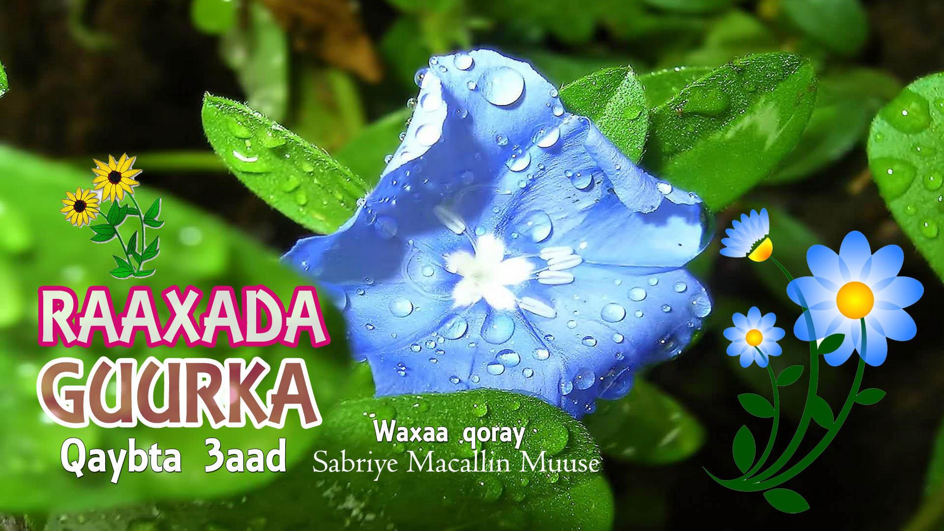 Raaxada Guurka – Qaybta 3aad