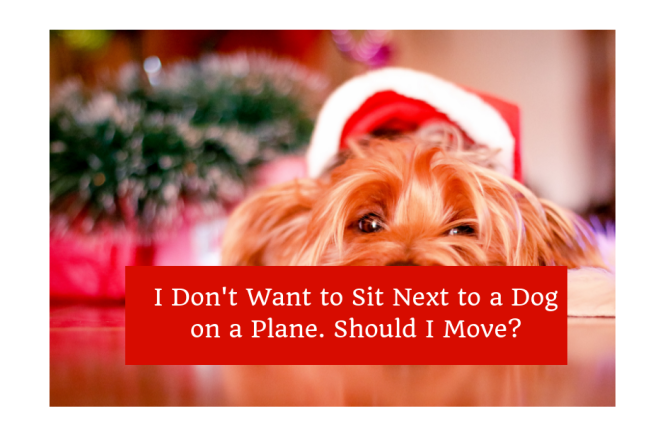 Sit Next to a Dog on a Plane