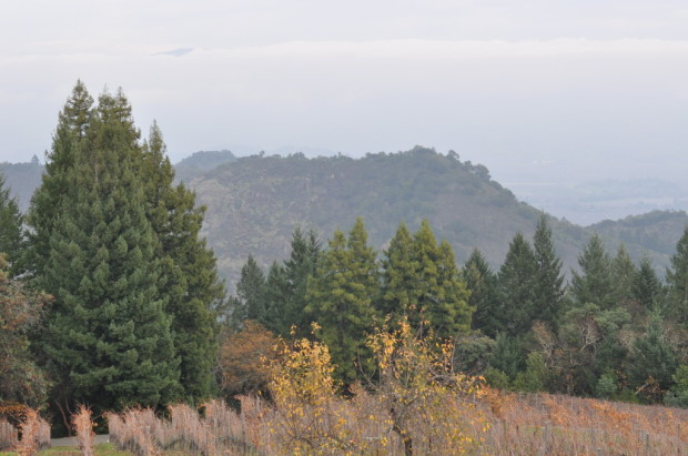 Looking through the fog into Napa Valley