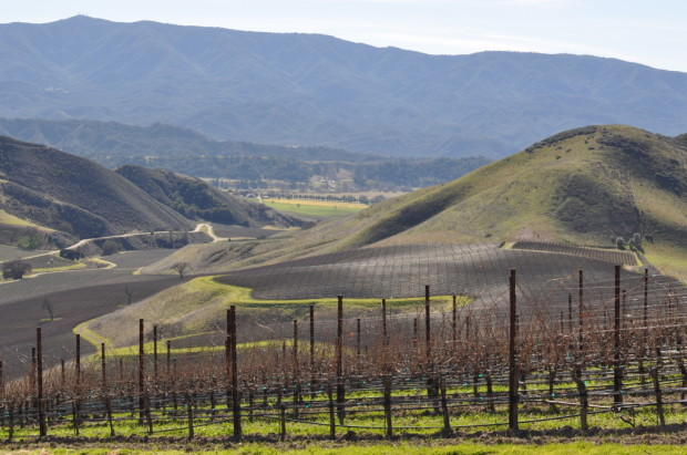 Star Lane Vineyards, looking into Happy Canyon
