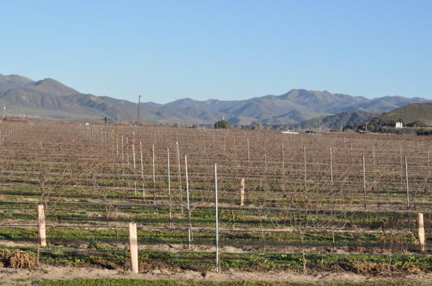 Riverbench Vineyards