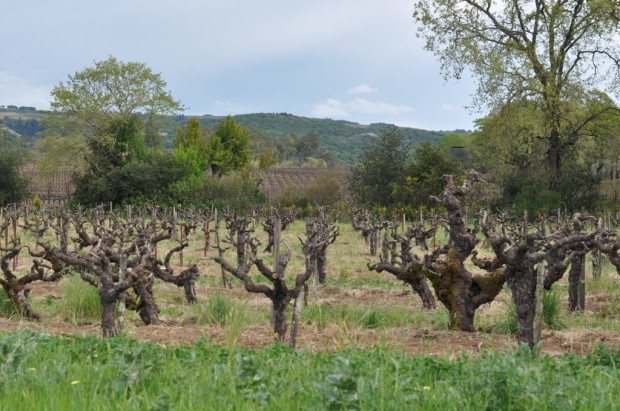 Old Vines at Bucklin