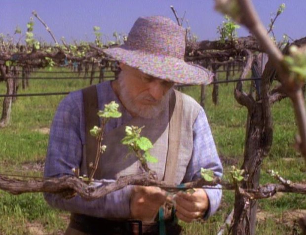 Jean Luc Picard inspecting his vines