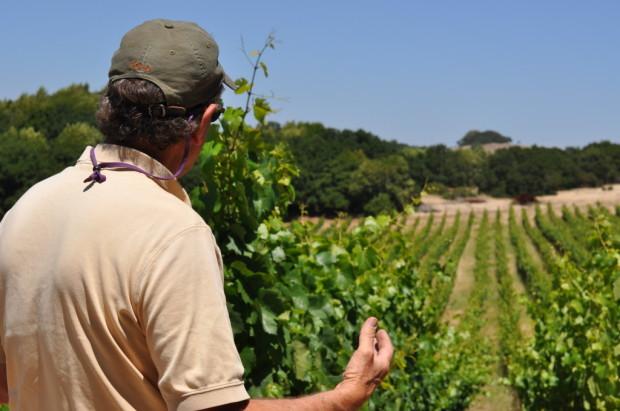 looking over the vineyard