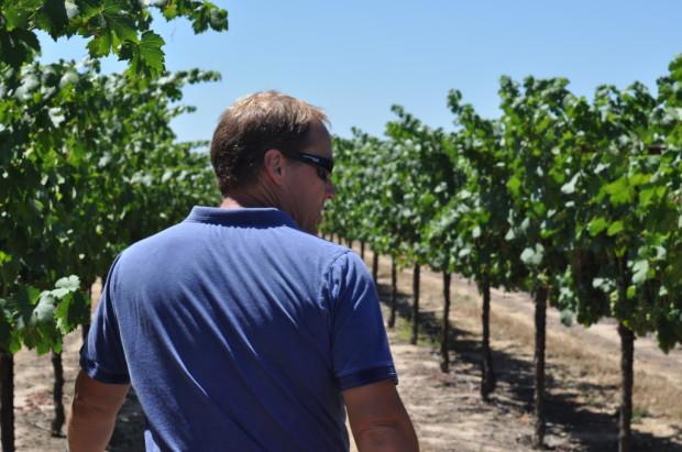 Vineyard Manager Kyle Lerner inspecting Primitivo