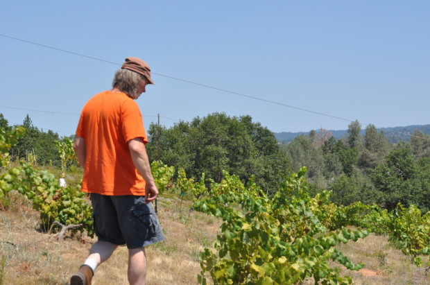 Hank Beckmeyer stepping into his head trained vines, El Dorado