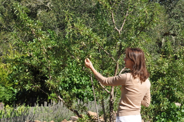 Kelly showing me the almond trees