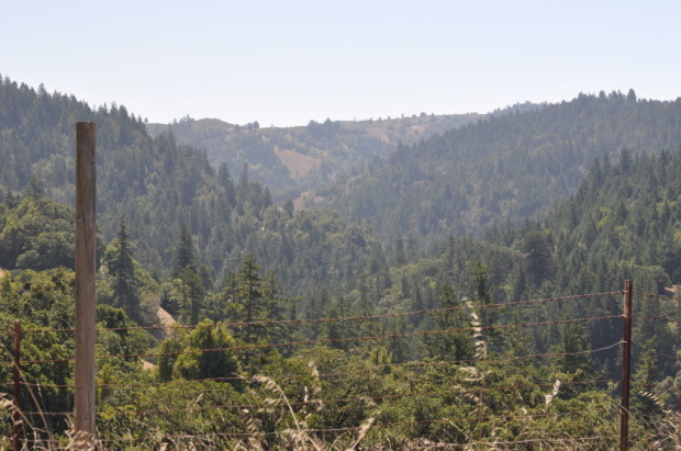 looking through the ridges of Fort Ross-Seaview AVA