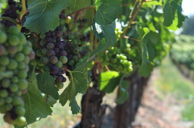 Fort Ross-Seaview Pinot Noir