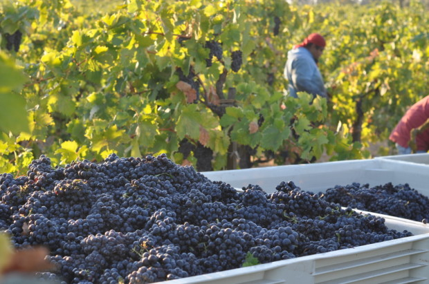 Harvesting Lizzie James