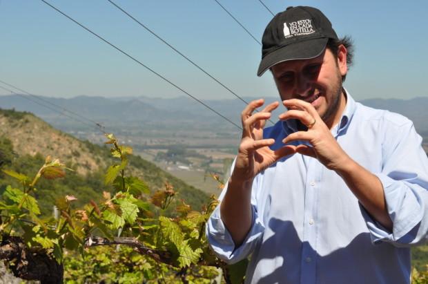 Sergio explaining vine development in Apalta