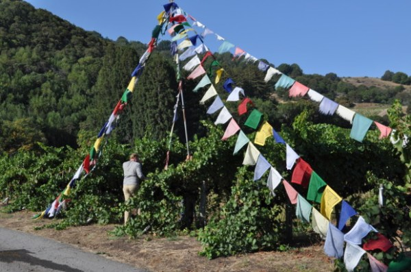 Putting up prayer flags to mark the start of harvest