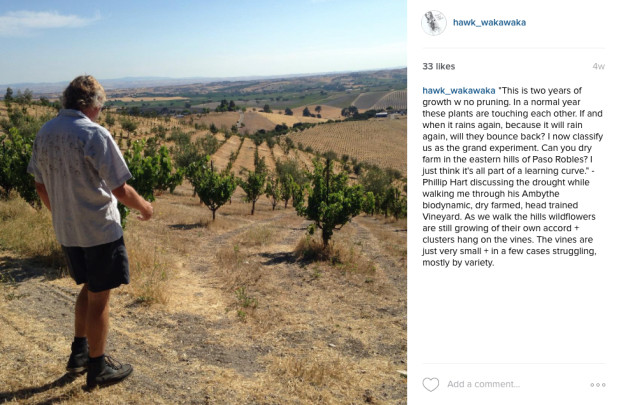 Phillip Hart in his Ambythe Vineyard, Paso Robles