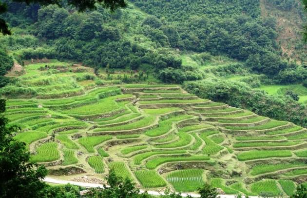 米作り体験農場