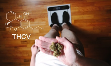 """THCV – The Compound That Curbs The Munchies, """"skinny pot"""" or the """"sports car of weed."""""""
