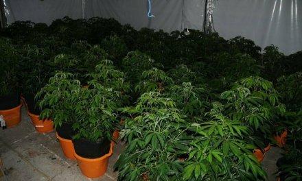 Irish Police Seize 800+ Plants in Raids