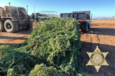 CA 48 Tonnes Seized in Huge Weed Bust
