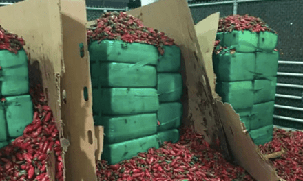 4 tons of weed found hidden in shipment of jalapeños