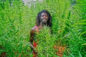 Jamaican Minister Touts Island As Medical Cannabis Destination