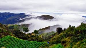 Philippines: Police raid marijuana plantations in Atok