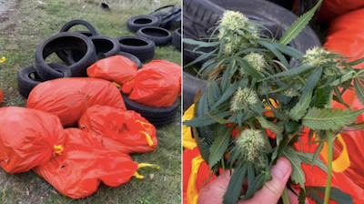 Australia: Cannabis plants found stuffed into seven garbage bags dumped on the side of Onkaparinga road