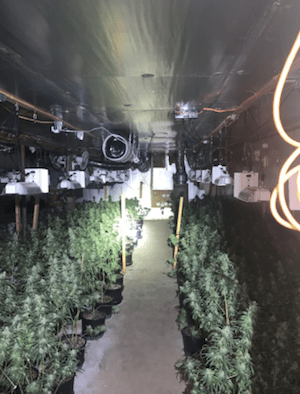 Massachusetts: 2 arrested, over 3,000 marijuana plants seized from illegal marijuana grow operation