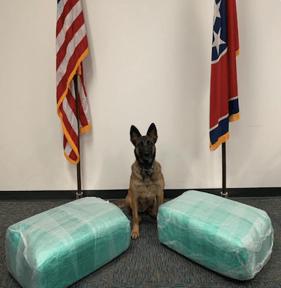 Police Discover 87 Pounds of Weed in Luggage at Nashville Airport