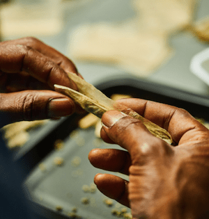 Jay-Z launches his very own cannabis line called Monogram