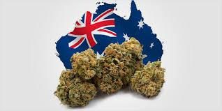 Article: Here's how pot execs think the UN's big cannabis shift can affect pot stocks in Australia