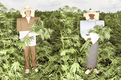 Models Pose In Hemp Fields Doing Their Best Grace Jones Impersonations