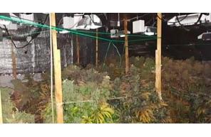Ireland: Search of Roscommon grow house nets cannabis worth €124,000