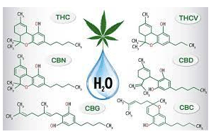 5 strategies for using water-soluble cannabinoids in cannabis drinks