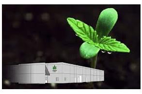 Creso Pharma subsidiary Mernova granted craft designation for Ritual Green cannabis products