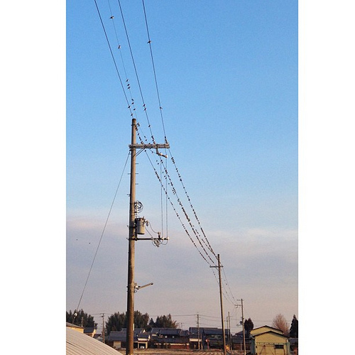 電線に鳥が… #iphonography #instagram #iphone5