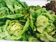 green-lettuce