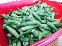 Freshly picked okra from Joe & Judy's garden