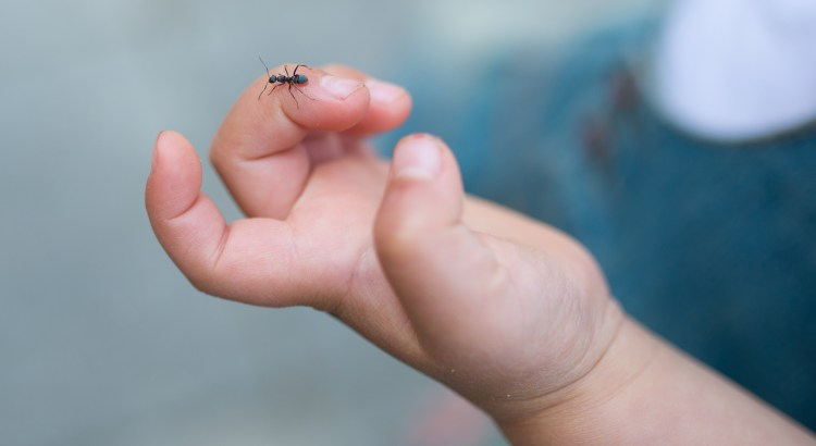 Ant on  a child's hand