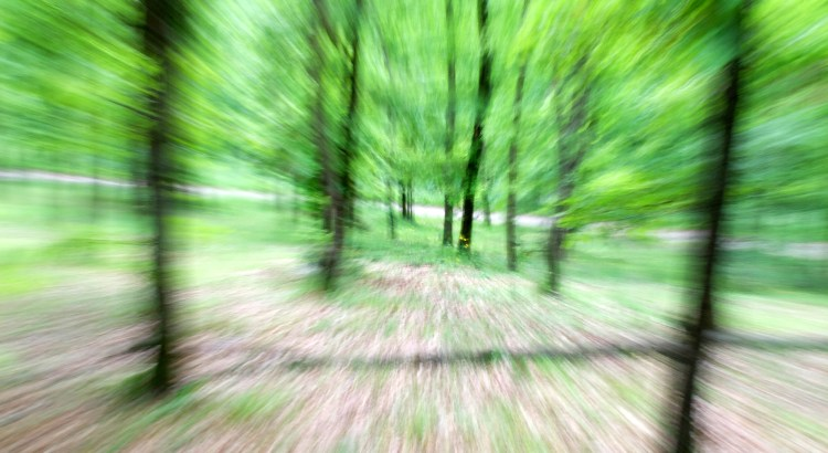 Blurred motion effect with trees in the forest.