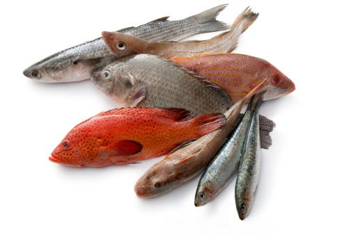 Various fish isolated on white (a.o tilapia, coral hind, sardines, lane snapper, tub gurnard