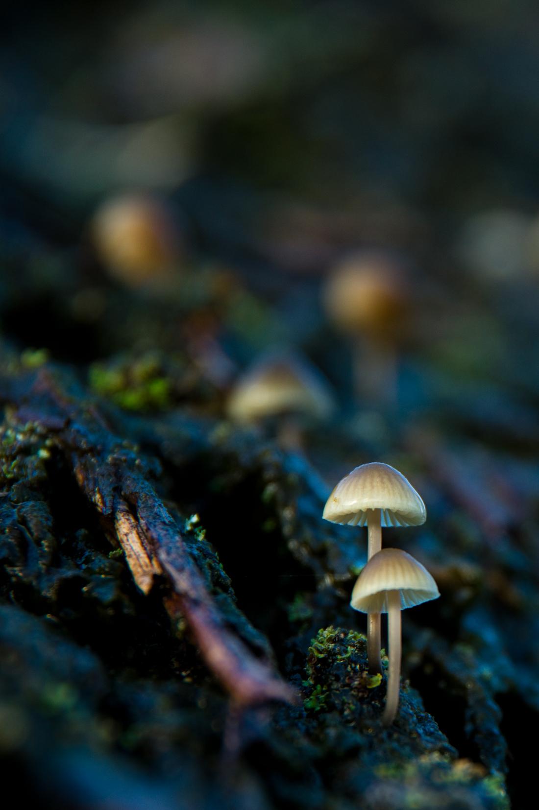 Jeffrey Wakanno funghi paddenstoel