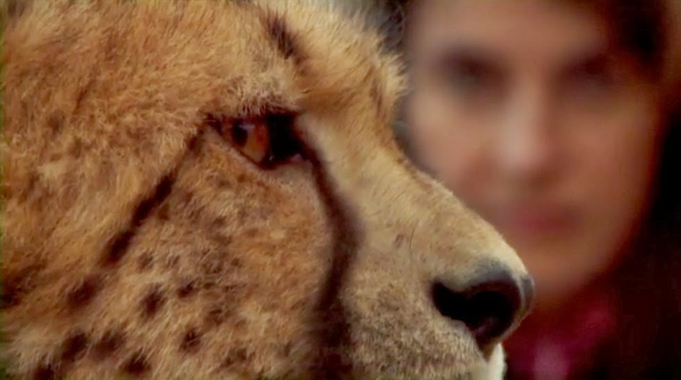 Animal Communicators Prove It's Possible to Hear an Animal's Thoughts - Anna Breytenbach and a Leopard
